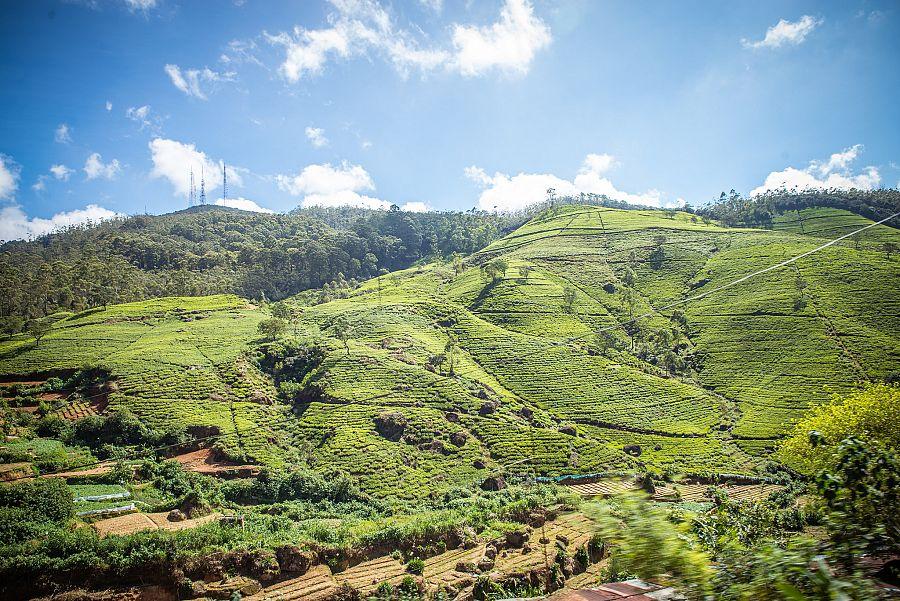 Sri_Lanka_cajove_plantaze_Radynacestu_foto_Pavel_Spurek.jpg