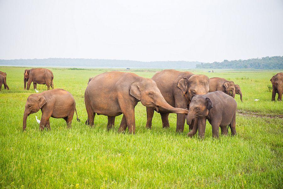 Sri_Lanka_NP_sloni_2_Radynacestu_foto_Pavel_Spurek.jpg