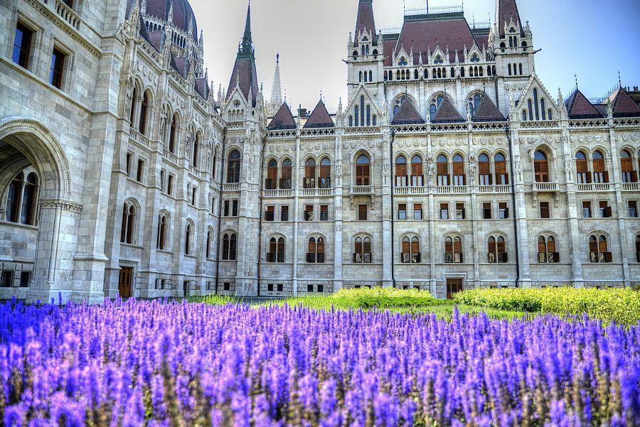 Budapest_parlament_levandule_Radynacestu_foto_Pavel_Spurek.jpg