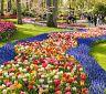 Keukenhof - květinové záhony hýřící barvami