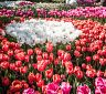 Parky se záplavou tulipánů